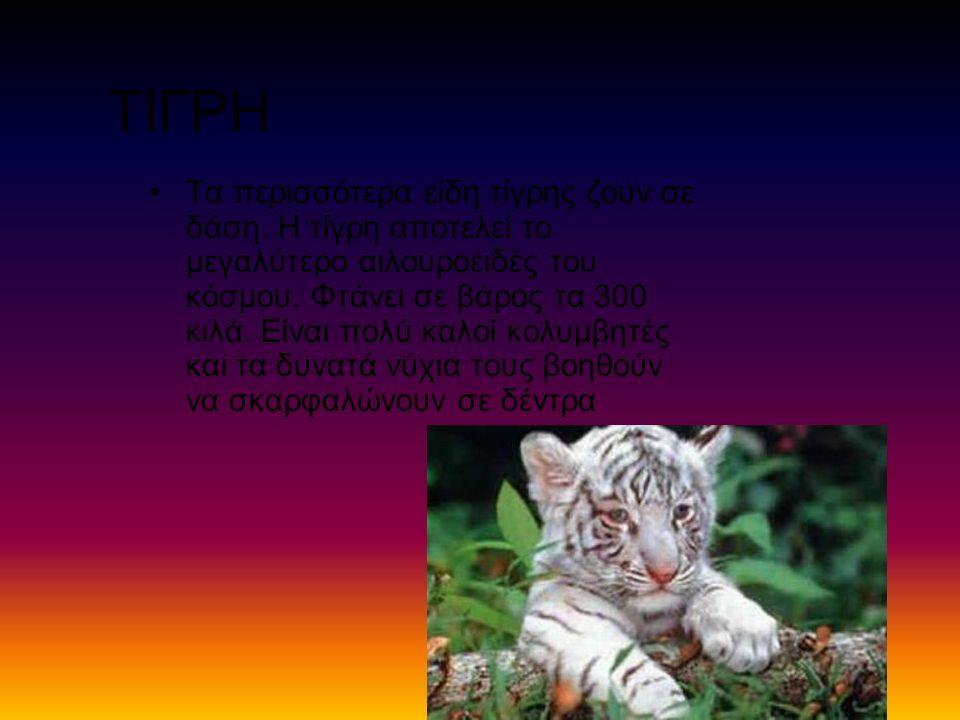 ΤΙΓΡΗ Τα περισσότερα είδη τίγρης ζουν σε δάση. Η τίγρη αποτελεί το μεγαλύτερο αιλουροειδές του κόσμου. Φτάνει σε βάρος τα 300 κιλά. Είναι πολύ καλοί κ