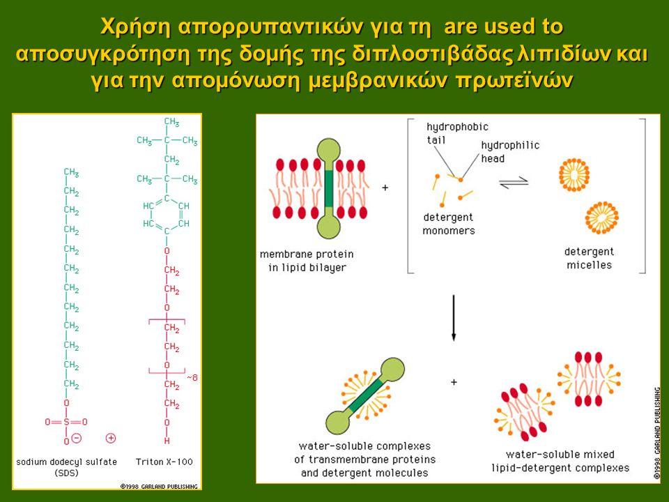 Χρήση απορρυπαντικών για τη are used to αποσυγκρότηση της δομής της διπλοστιβάδας λιπιδίων και για την απομόνωση μεμβρανικών πρωτεϊνών