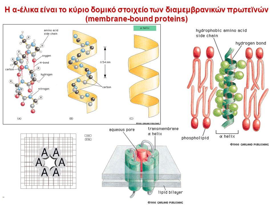Η α-έλικα είναι το κύριο δομικό στοιχείο των διαμεμβρανικών πρωτεϊνών (membrane-bound proteins)