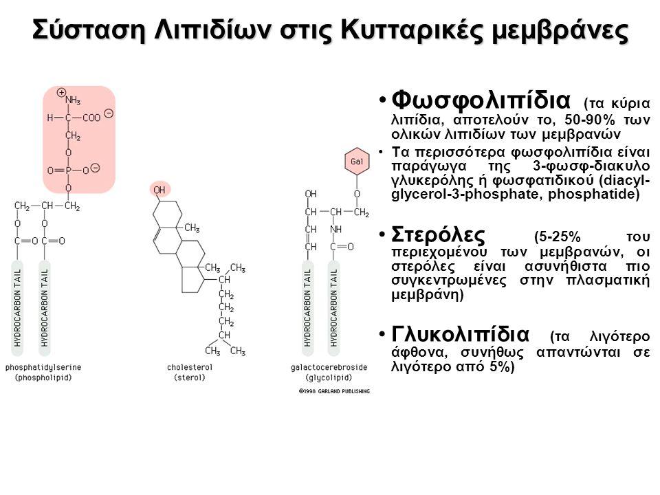 Φωσφολιπίδια (τα κύρια λιπίδια, αποτελούν το, 50-90% των ολικών λιπιδίων των μεμβρανών Τα περισσότερα φωσφολιπίδια είναι παράγωγα της 3-φωσφ-διακυλο γλυκερόλης ή φωσφατιδικού (diacyl- glycerol-3-phosphate, phosphatide) Στερόλες (5-25% του περιεχομένου των μεμβρανών, οι στερόλες είναι ασυνήθιστα πιο συγκεντρωμένες στην πλασματική μεμβράνη) Γλυκολιπίδια (τα λιγότερο άφθονα, συνήθως απαντώνται σε λιγότερο από 5%) Σύσταση Λιπιδίων στις Κυτταρικές μεμβράνες