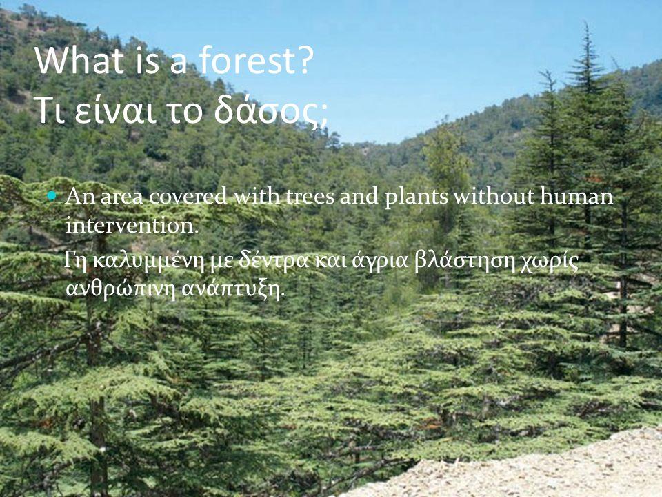 Benefits (Οφέλη)- 1 Clean Air, Oxygen (καθαρός αέρας, οξυγόνο) Stable temperature (σταθερή θερμοκρασία) Shade (σκιά) Tranquility (γαλήνη) Shelter for wild life (plants, trees, animals, birds) (καταφύγιο για την άγρια ζωή - φυτά, δέντρα, ζώα, πουλιά)