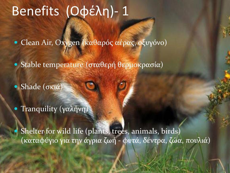 Benefits (Οφέλη)- 1 Clean Air, Oxygen (καθαρός αέρας, οξυγόνο) Stable temperature (σταθερή θερμοκρασία) Shade (σκιά) Tranquility (γαλήνη) Shelter for