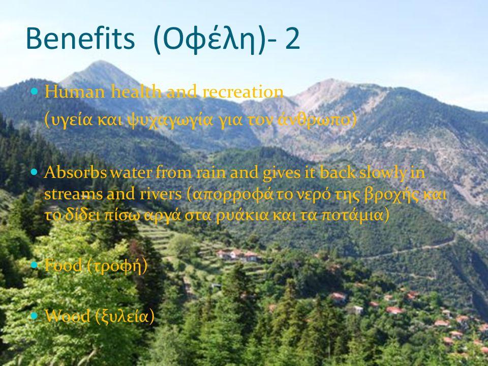 Types of forests in Cyprus Είδη δασών στην Κύπρο Pine tree forests (πευκοδάση) Altitude 0-1900 m (υψόμετρο 0-1900 μέτρα) Shrubs and bushes (θαμνώδης και χαμηλή βλάστηση) Altitude 0-1400 m (υψόμετρο 0-1400 μέτρα)