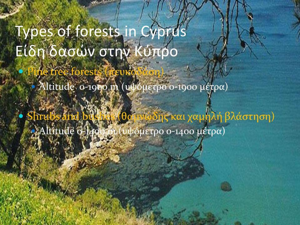 Types of forests in Cyprus Είδη δασών στην Κύπρο Pine tree forests (πευκοδάση) Altitude 0-1900 m (υψόμετρο 0-1900 μέτρα) Shrubs and bushes (θαμνώδης κ