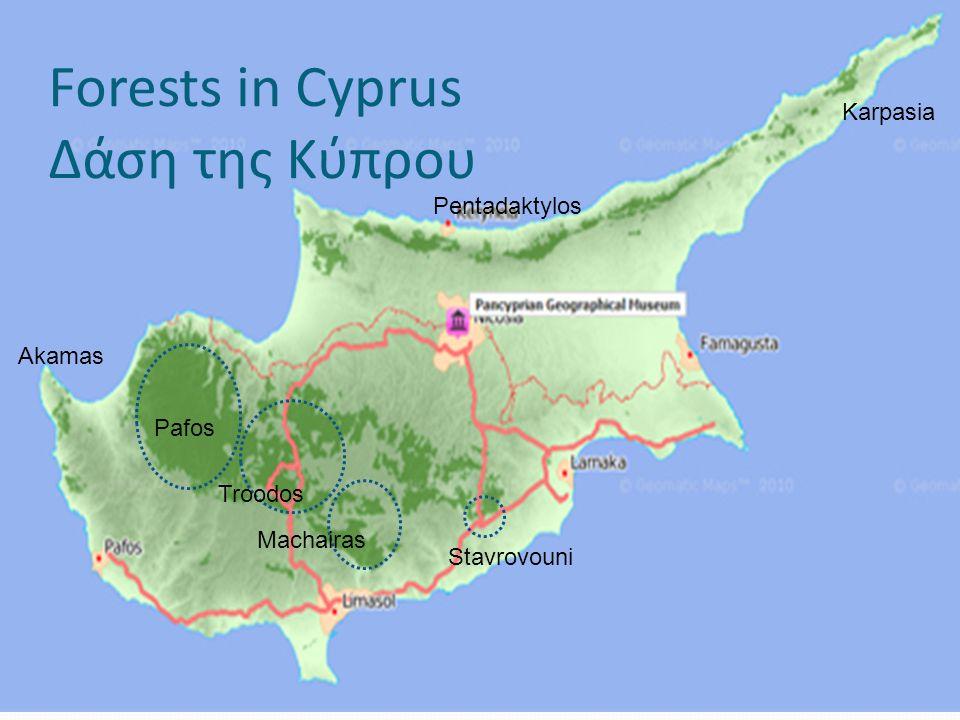 Forests in Cyprus Δάση της Κύπρου Pafos Troodos Karpasia Akamas Machairas Stavrovouni Pentadaktylos