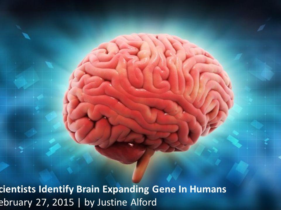 7 Φιλοσοφία της Ιστορίας και του Πολιτισμού Scientists Identify Brain Expanding Gene In Humans February 27, 2015 | by Justine Alford Εικόνα 5