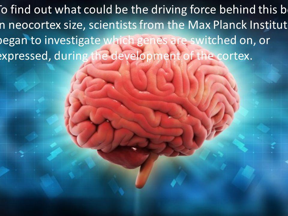 9 Φιλοσοφία της Ιστορίας και του Πολιτισμού The region of the brain scientists homed in on for their study was the neocortex, which—as the name suggests—is the newest addition to our brain.neocortex In humans, this portion of the cerebral cortex is crammed with around 100 billion cells and is the center of higher cognitive function.