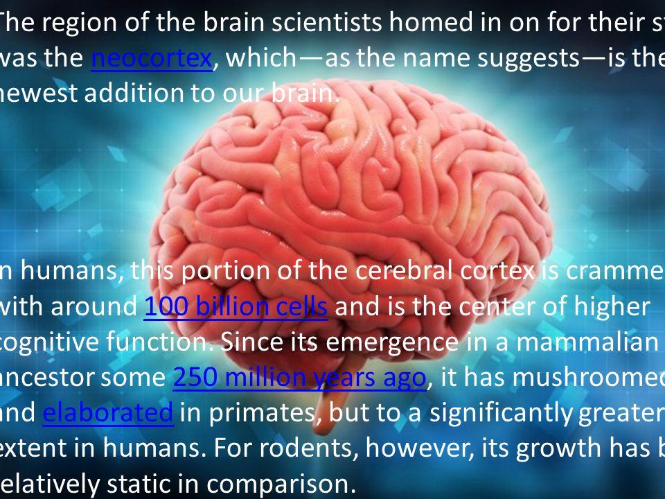 10 Φιλοσοφία της Ιστορίας και του Πολιτισμού Although it seems this gene may have been a key player in driving neocortex expansion, there must be other factors contributing to our unique mental abilities as well.