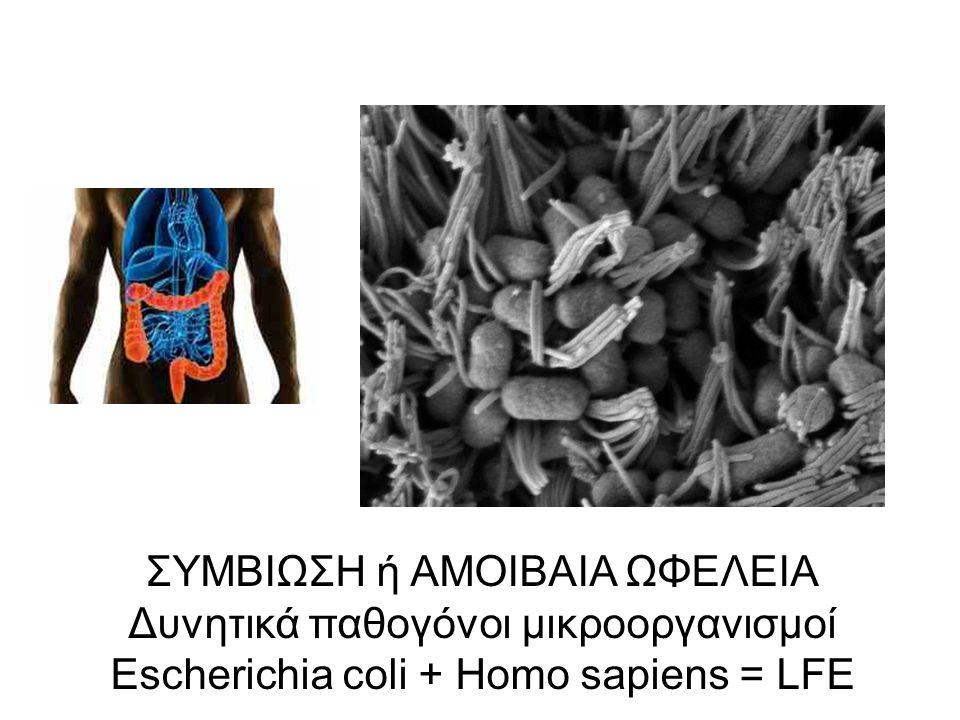 Δυνητικά παθογόνοι μικροοργανισμοί Escherichia coli + Homo sapiens = LFE