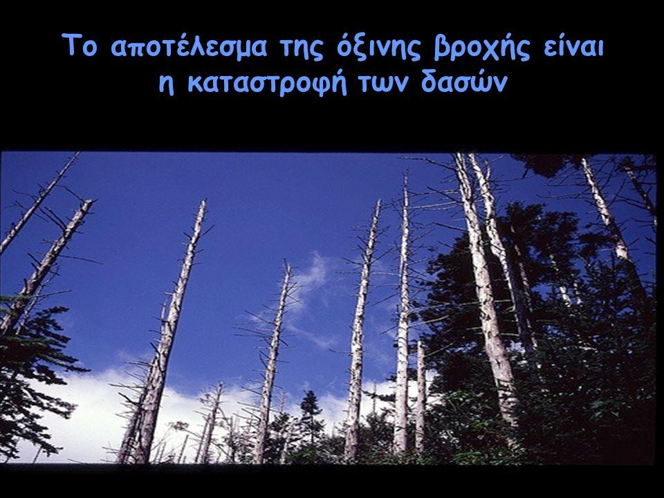 Το αποτέλεσμα της όξινης βροχής είναι η καταστροφή των δασών