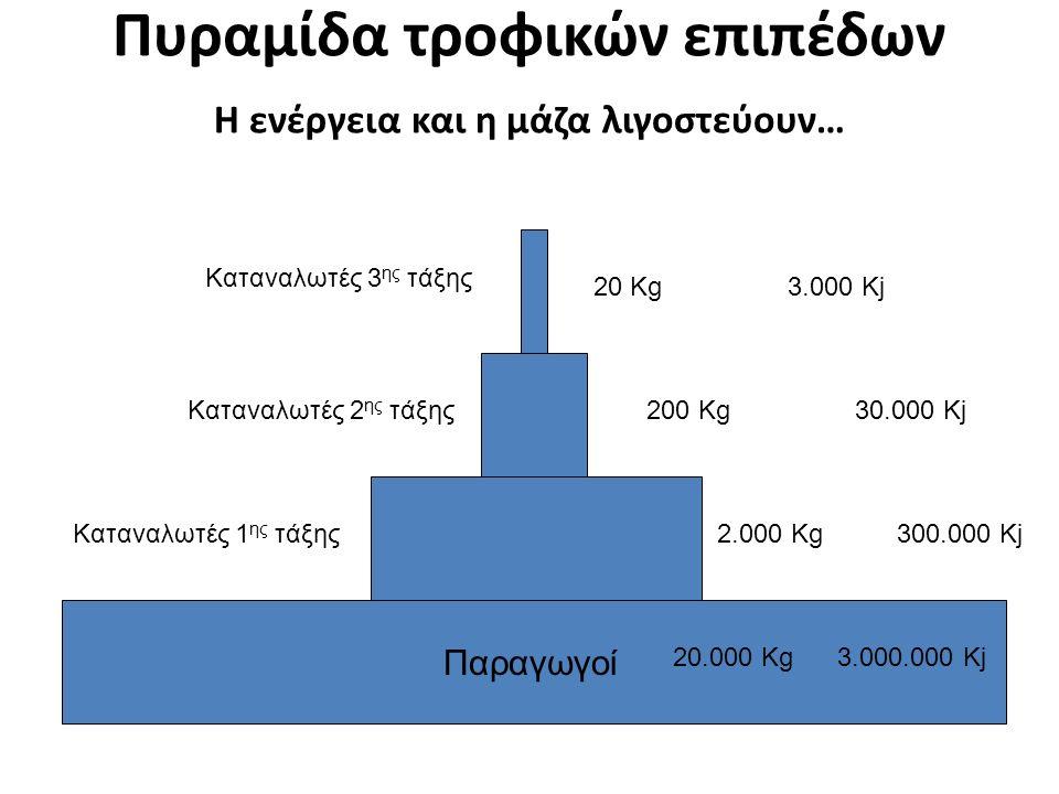 Παραγωγοί Καταναλωτές 1 ης τάξης Καταναλωτές 2 ης τάξης Καταναλωτές 3 ης τάξης Πυραμίδα τροφικών επιπέδων Η ενέργεια και η μάζα λιγοστεύουν… 20 Kg 3.000 Kj 200 Kg 30.000 Kj 2.000 Kg 300.000 Kj 20.000 Kg 3.000.000 Kj