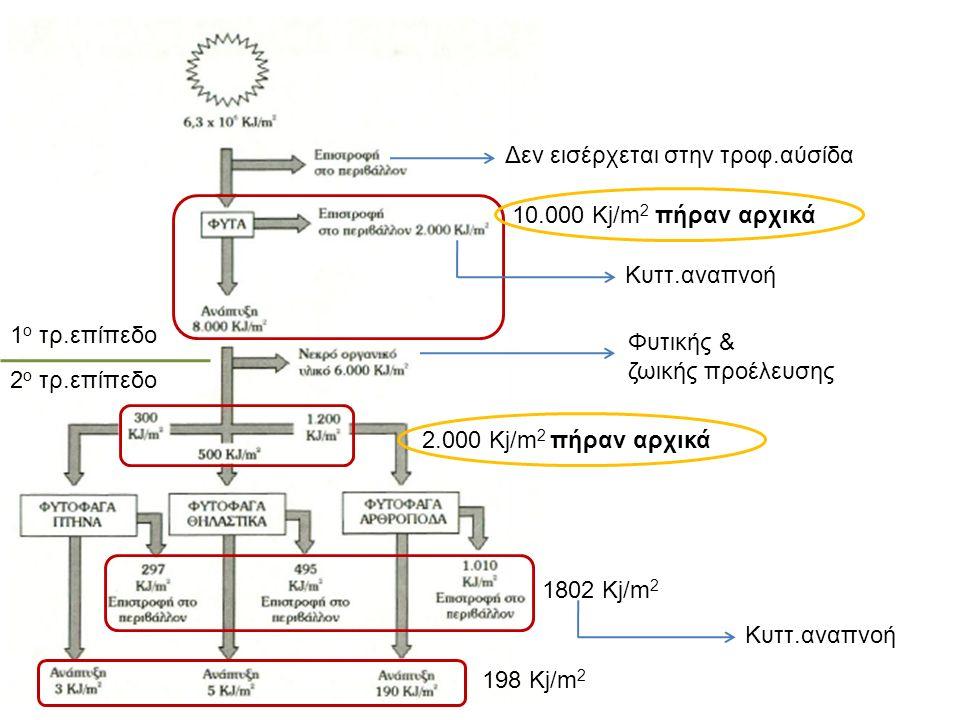 10.000 Kj/m 2 πήραν αρχικά 1802 Kj/m 2 198 Kj/m 2 2.000 Kj/m 2 πήραν αρχικά Κυττ.αναπνοή Φυτικής & ζωικής προέλευσης Κυττ.αναπνοή Δεν εισέρχεται στην τροφ.αύσίδα 1 ο τρ.επίπεδο 2 ο τρ.επίπεδο