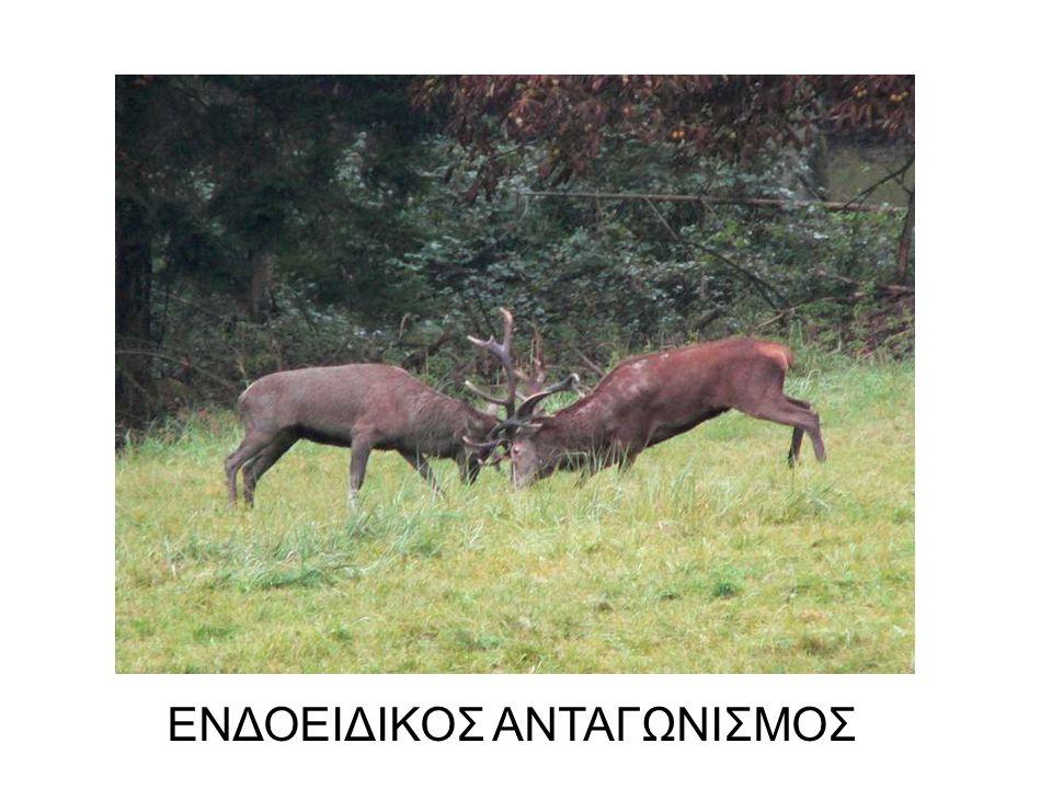 ΕΝΔΟ/ΔΙΑΕΙΔΙΚΟΣ ΑΝΤΑΓΩΝΙΣΜΟΣ
