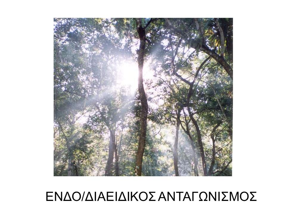 …ΣΤΟ ΠΗΓΑΔΙ … ΡΥΠΑΝΣΗ