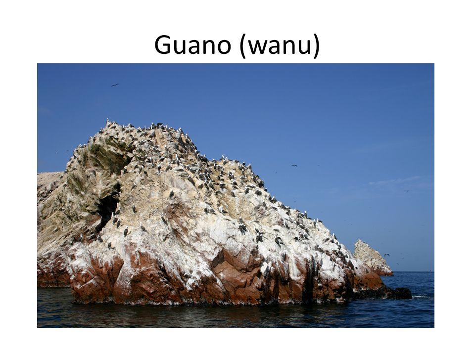 Guano (wanu)