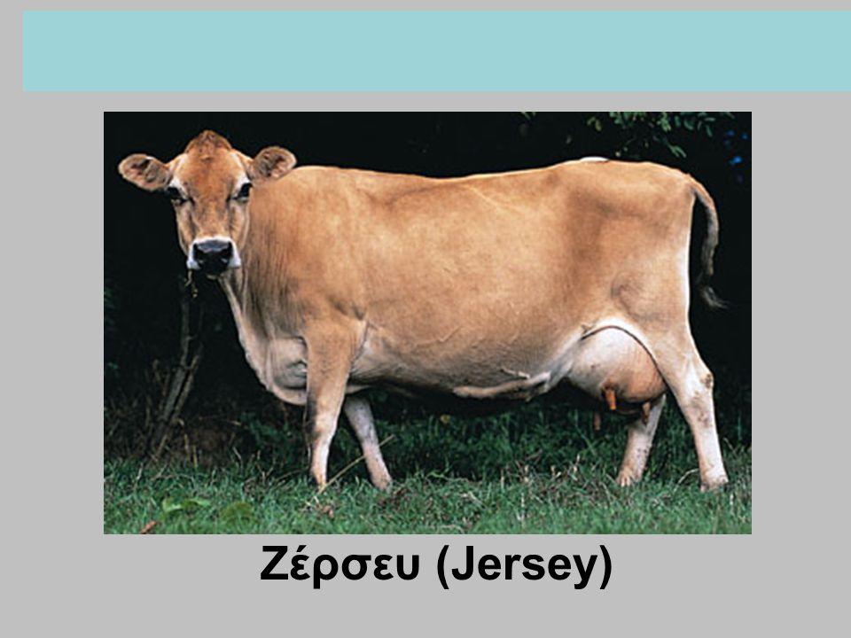 Ζέρσευ (Jersey)