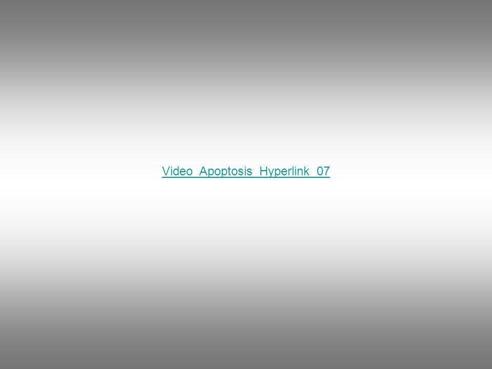 Video_Apoptosis_Hyperlink_07