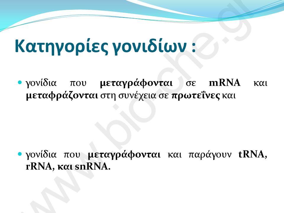 Κατηγορίες γονιδίων : γονίδια που μεταγράφονται σε mRNA και μεταφράζονται στη συνέχεια σε πρωτεΐνες και γονίδια που μεταγράφονται και παράγουν tRNA, rRNA, και snRNA.