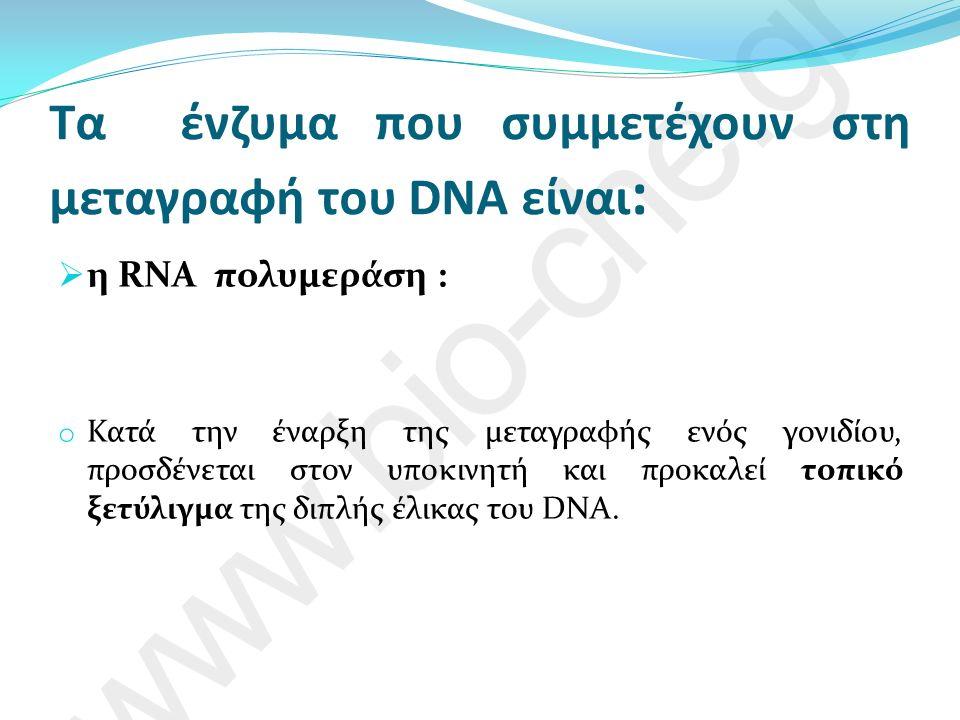 Τα ένζυμα που συμμετέχουν στη μεταγραφή του DNA είναι :  η RNA πολυμεράση : o Κατά την έναρξη της μεταγραφής ενός γονιδίου, προσδένεται στον υποκινητή και προκαλεί τοπικό ξετύλιγμα της διπλής έλικας του DNA.