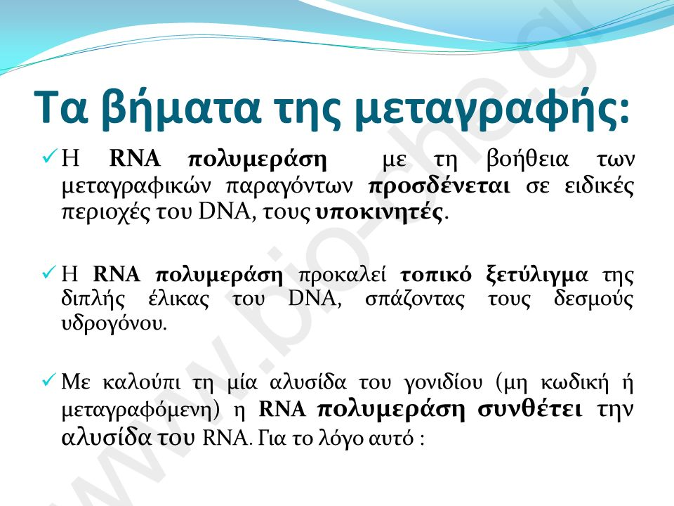 Τα βήματα της μεταγραφής: Η RNA πολυμεράση με τη βοήθεια των μεταγραφικών παραγόντων προσδένεται σε ειδικές περιοχές του DNA, τους υποκινητές.
