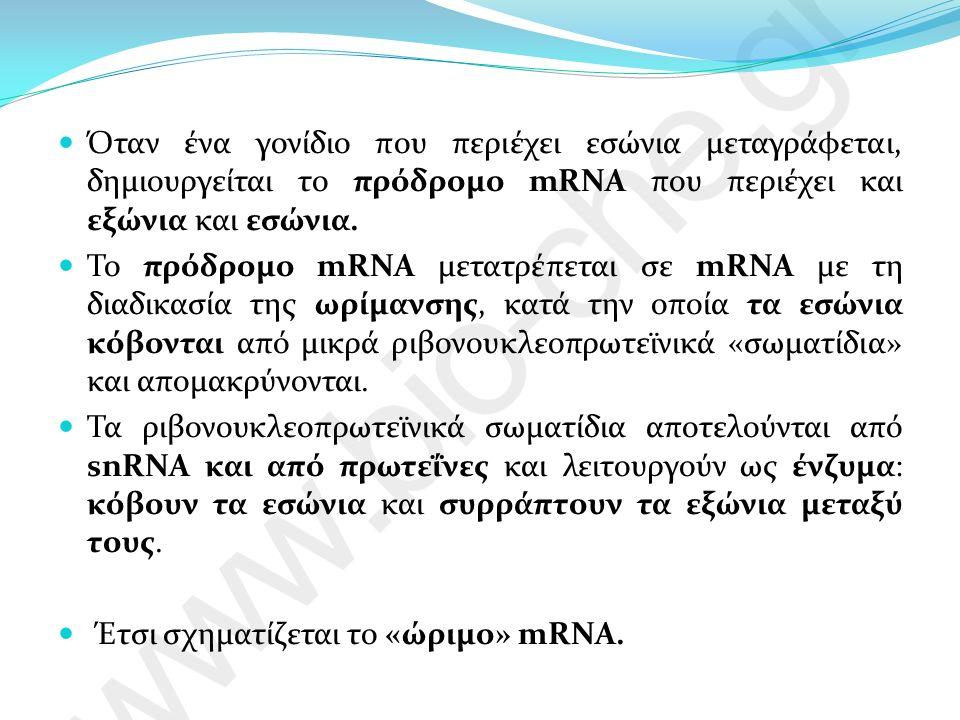 Όταν ένα γονίδιο που περιέχει εσώνια μεταγράφεται, δημιουργείται το πρόδρομο mRNA που περιέχει και εξώνια και εσώνια.
