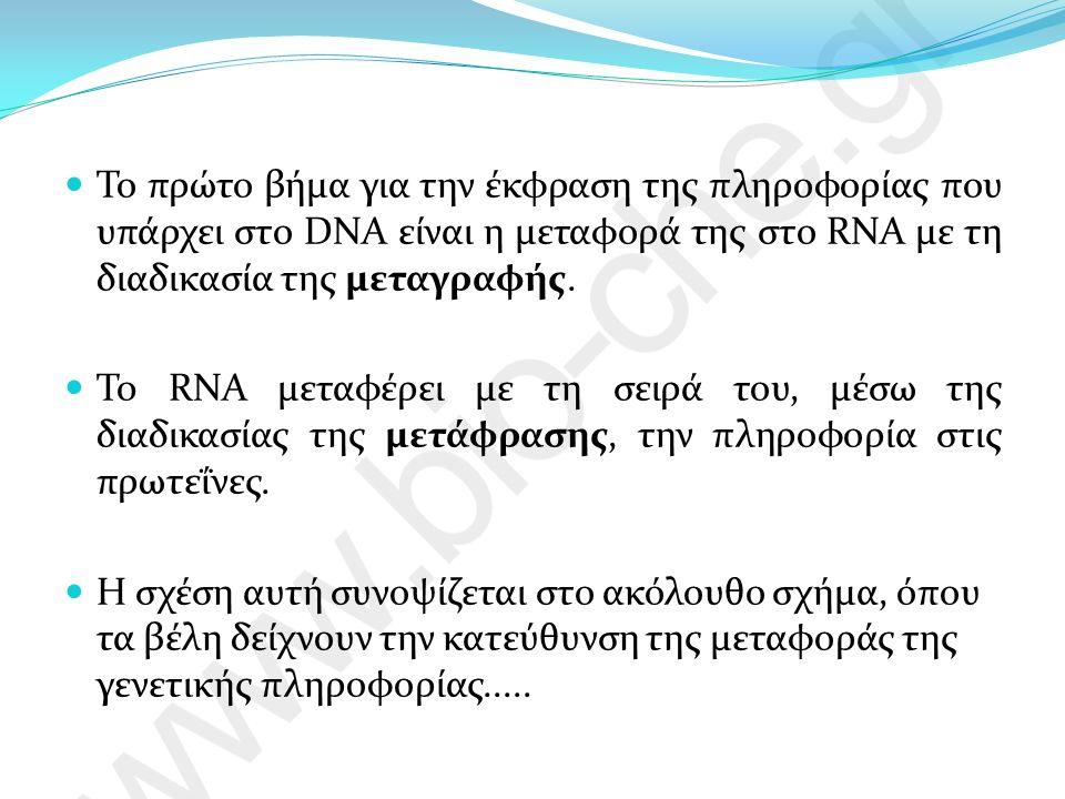 Διαφορές στη μεταγραφή Ευκαρυωτικοί οργανισμοί Προκαρυωτικοί οργανισμοί 3 είδη RNA πολυμερασών το mRNA που παράγεται κατά τη μεταγραφή ενός γονιδίου συνήθως δεν είναι έτοιμο να μεταφραστεί, αλλά υφίσταται μια πολύπλοκη διαδικασία ωρίμανσης 1 είδος RNA πολυμεράσης το mRNA αρχίζει να μεταφράζεται σε πρωτεΐνη πριν ακόμη ολοκληρωθεί η μεταγραφή του.