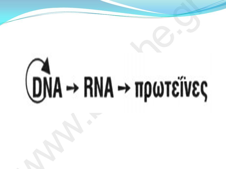 Το σχήμα αυτό αποτελεί το κεντρικό δόγμα της Μοριακής Βιολογίας όπως ονομάστηκε από τον F.