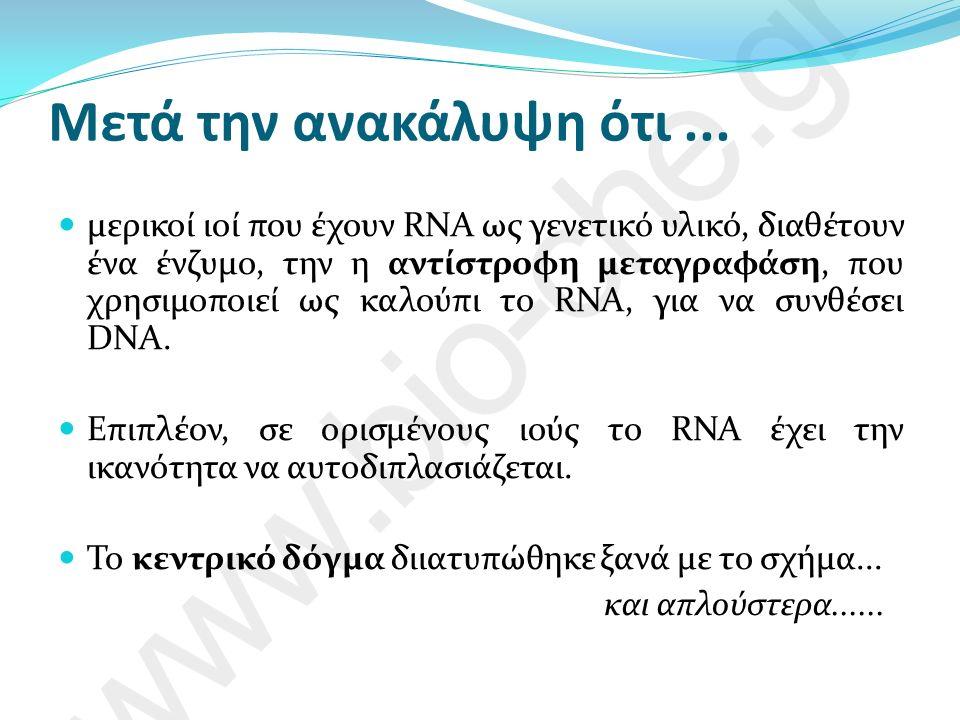 Το «ώριμο» mRNA, παρ ότι αποτελείται αποκλειστικά από εξώνια, έχει δύο περιοχές που δε μεταφράζονται σε αμινοξέα.