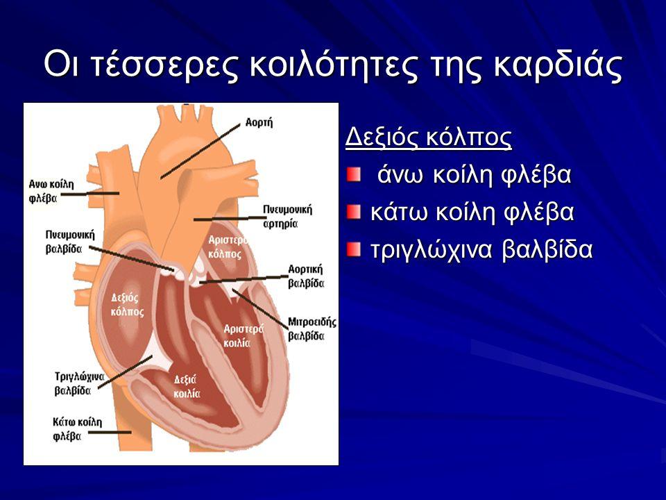 Οι τέσσερες κοιλότητες της καρδιάς Δεξιός κόλπος άνω κοίλη φλέβα άνω κοίλη φλέβα κάτω κοίλη φλέβα τριγλώχινα βαλβίδα