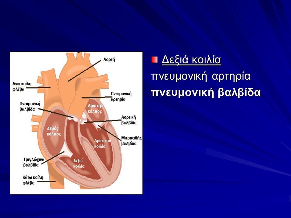 Δεξιά κοιλία πνευμονική αρτηρία πνευμονική βαλβίδα