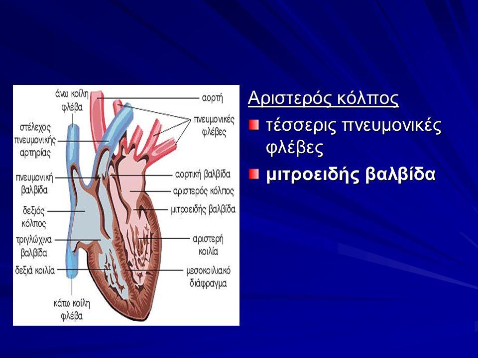Αριστερός κόλπος τέσσερις πνευμονικές φλέβες μιτροειδής βαλβίδα