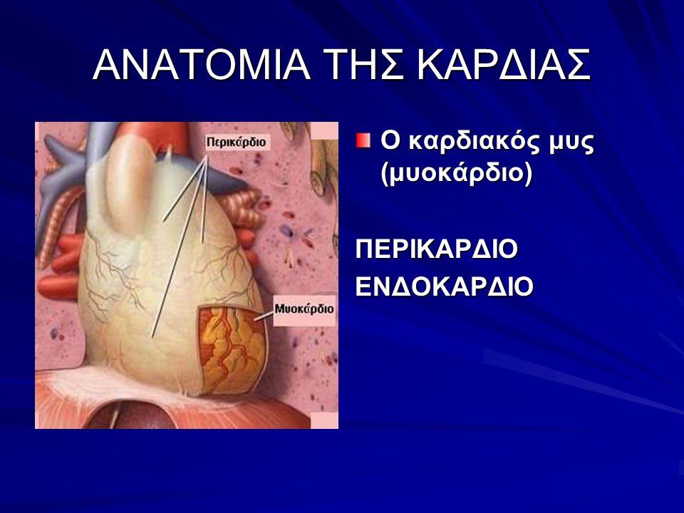 ANATOMIA THΣ ΚΑΡΔΙΑΣ Ο καρδιακός μυς (μυοκάρδιο) ΠΕΡΙΚΑΡΔΙΟΕΝΔΟΚΑΡΔΙΟ