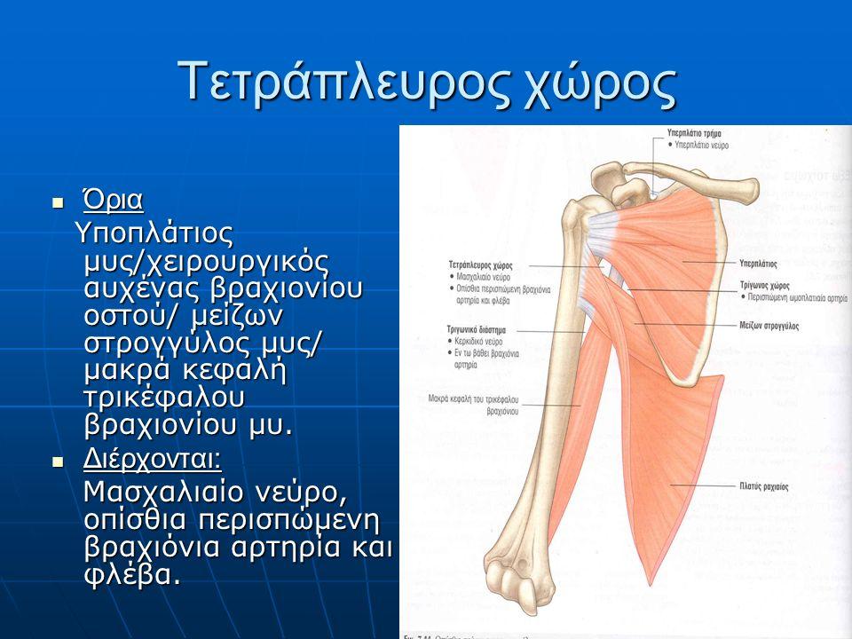 Τετράπλευρος χώρος Όρια Όρια Υποπλάτιος μυς/χειρουργικός αυχένας βραχιονίου οστού/ μείζων στρογγύλος μυς/ μακρά κεφαλή τρικέφαλου βραχιονίου μυ.