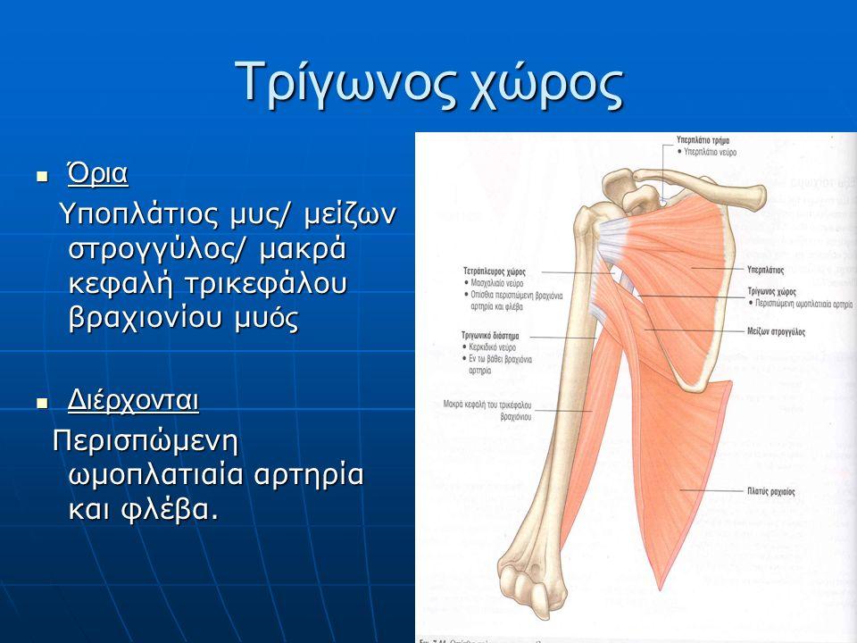 Τρίγωνος χώρος Όρια Όρια Υποπλάτιος μυς/ μείζων στρογγύλος/ μακρά κεφαλή τρικεφάλου βραχιονίου μυ ός Υποπλάτιος μυς/ μείζων στρογγύλος/ μακρά κεφαλή τρικεφάλου βραχιονίου μυ ός Διέρχονται Διέρχονται Περισπώμενη ωμοπλατιαία αρτηρία και φλέβα.