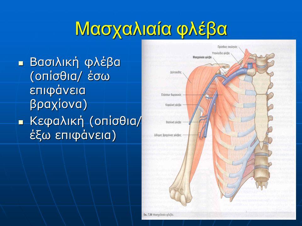 Μασχαλιαία φλέβα Βασιλική φλέβα (οπίσθια/ έσω επιφάνεια βραχίονα) Βασιλική φλέβα (οπίσθια/ έσω επιφάνεια βραχίονα) Κεφαλική (οπίσθια/ έξω επιφάνεια) Κεφαλική (οπίσθια/ έξω επιφάνεια)