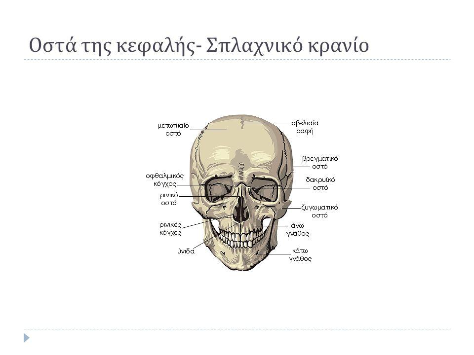 Οστά της κεφαλής - Σπλαχνικό κρανίο