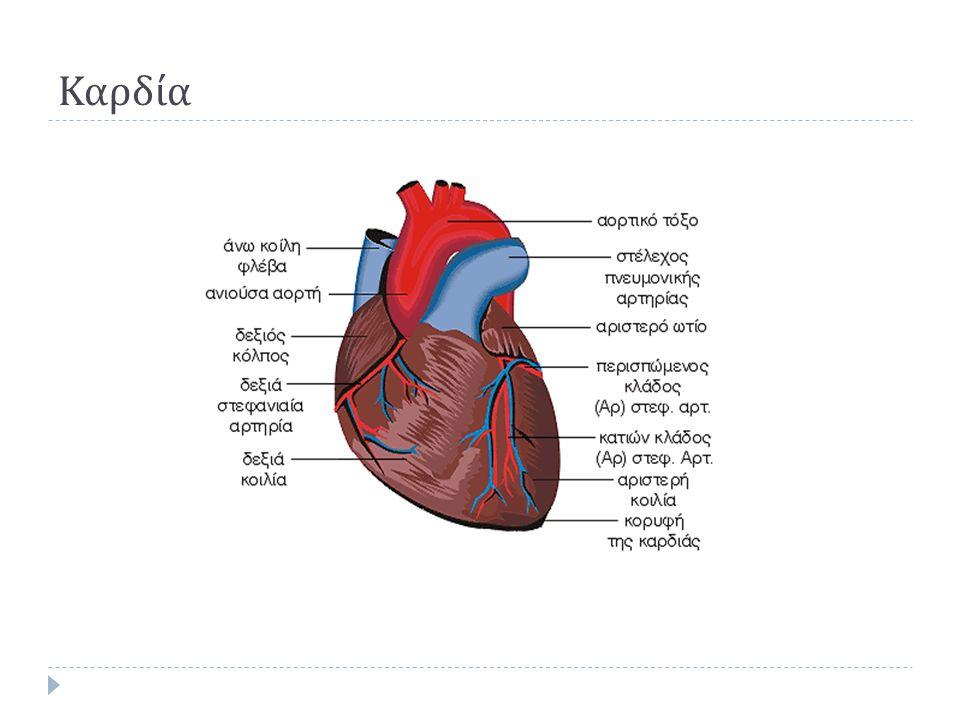 Καρδία