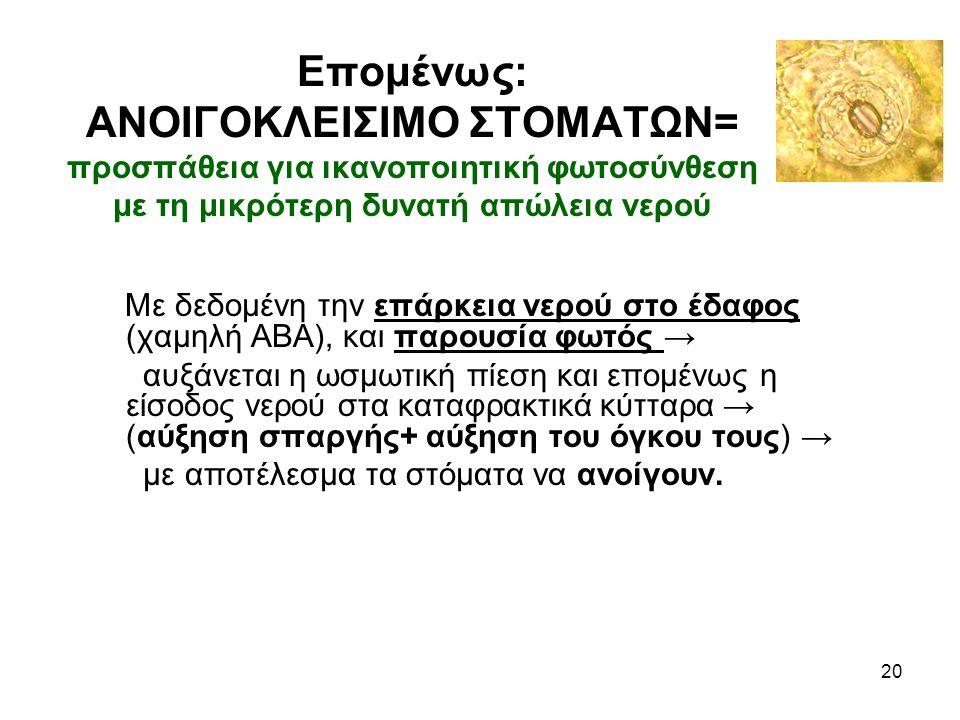 Επομένως: ΑΝΟΙΓΟΚΛΕΙΣΙΜΟ ΣΤΟΜΑΤΩΝ= προσπάθεια για ικανοποιητική φωτοσύνθεση με τη μικρότερη δυνατή απώλεια νερού Με δεδομένη την επάρκεια νερού στο έδαφος (χαμηλή ΑΒΑ), και παρουσία φωτός → αυξάνεται η ωσμωτική πίεση και επομένως η είσοδος νερού στα καταφρακτικά κύτταρα → (αύξηση σπαργής+ αύξηση του όγκου τους) → με αποτέλεσμα τα στόματα να ανοίγουν.