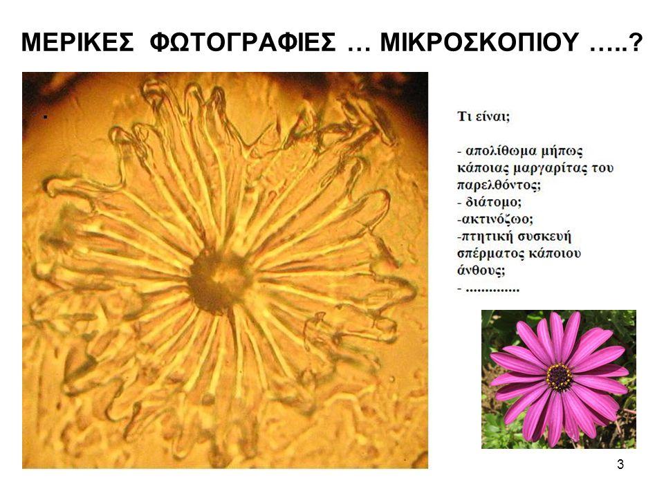 ΜΕΡΙΚΕΣ ΦΩΤΟΓΡΑΦΙΕΣ … ΜΙΚΡΟΣΚΟΠΙΟΥ ….. 3