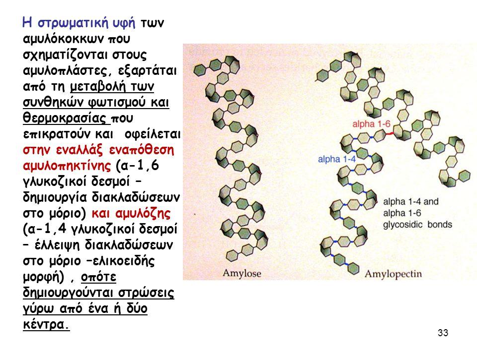 Η στρωματική υφή των αμυλόκοκκων που σχηματίζονται στους αμυλοπλάστες, εξαρτάται από τη μεταβολή των συνθηκών φωτισμού και θερμοκρασίας που επικρατούν και οφείλεται στην εναλλάξ εναπόθεση αμυλοπηκτίνης (α-1,6 γλυκοζικοί δεσμοί – δημιουργία διακλαδώσεων στο μόριο) και αμυλόζης (α-1,4 γλυκοζικοί δεσμοί – έλλειψη διακλαδώσεων στο μόριο –ελικοειδής μορφή), οπότε δημιουργούνται στρώσεις γύρω από ένα ή δύο κέντρα.