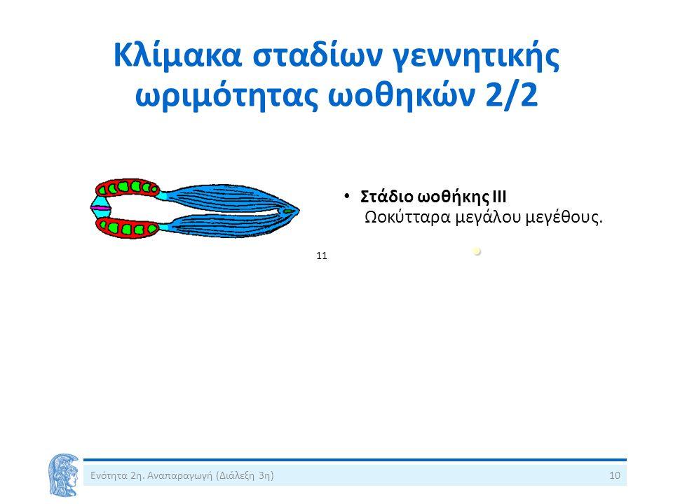Κλίμακα σταδίων γεννητικής ωριμότητας ωοθηκών 2/2 Ενότητα 2η.