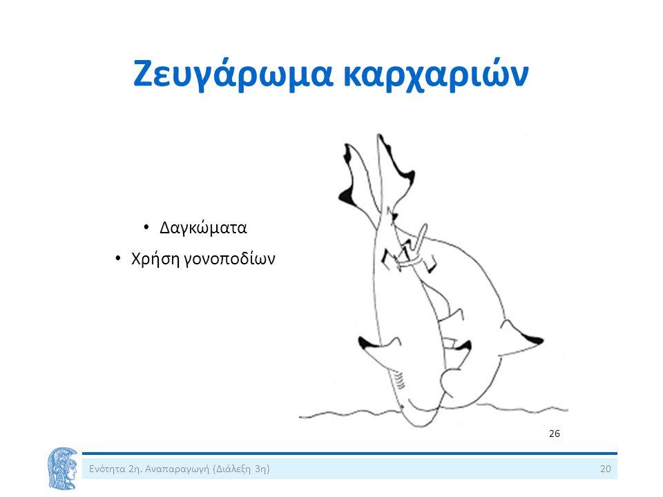 Ζευγάρωμα καρχαριών Δαγκώματα Χρήση γονοποδίων Ενότητα 2η. Αναπαραγωγή (Διάλεξη 3η)20 26
