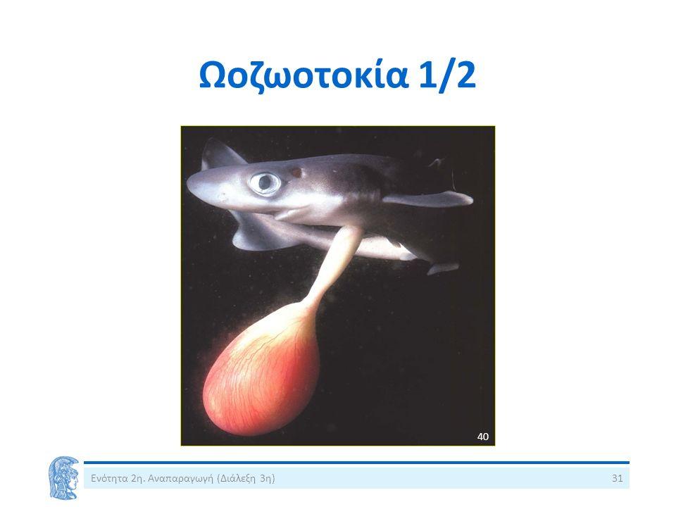 Ωοζωοτοκία 1/2 Ενότητα 2η. Αναπαραγωγή (Διάλεξη 3η)31 40
