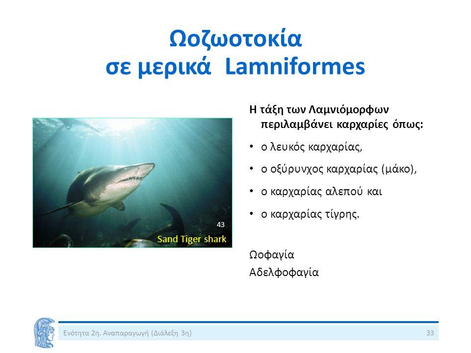 Ωοζωοτοκία σε μερικά Lamniformes Η τάξη των Λαμνιόμορφων περιλαμβάνει καρχαρίες όπως: ο λευκός καρχαρίας, ο οξύρυνχος καρχαρίας (μάκο), ο καρχαρίας αλεπού και ο καρχαρίας τίγρης.