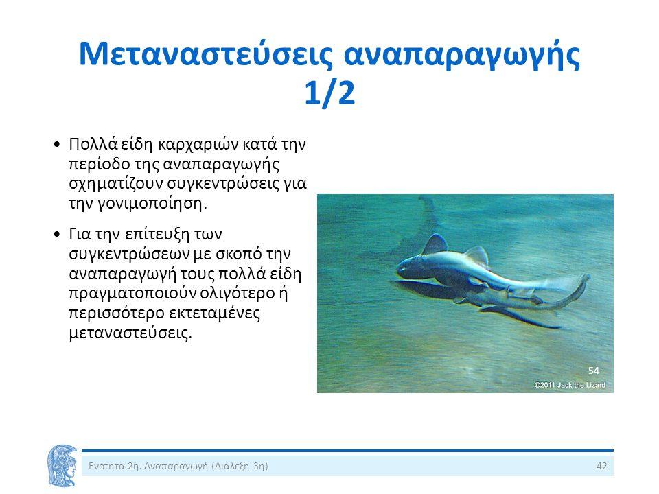 Μεταναστεύσεις αναπαραγωγής 1/2 Πολλά είδη καρχαριών κατά την περίοδο της αναπαραγωγής σχηματίζουν συγκεντρώσεις για την γονιμοποίηση.
