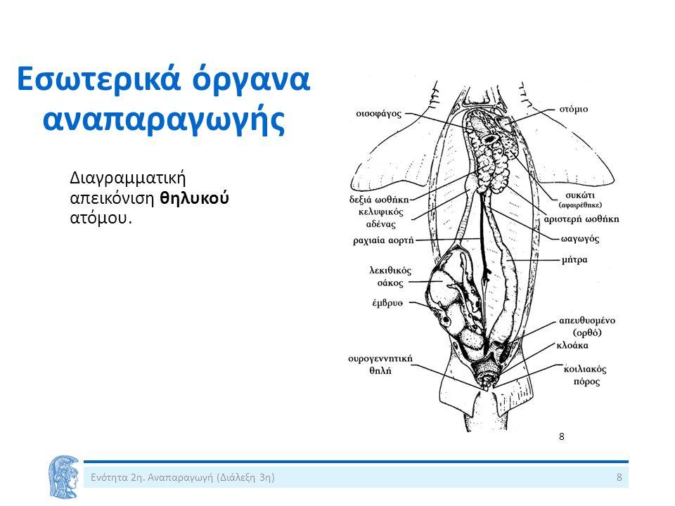Εσωτερικά όργανα αναπαραγωγής Διαγραμματική απεικόνιση θηλυκού ατόμου.