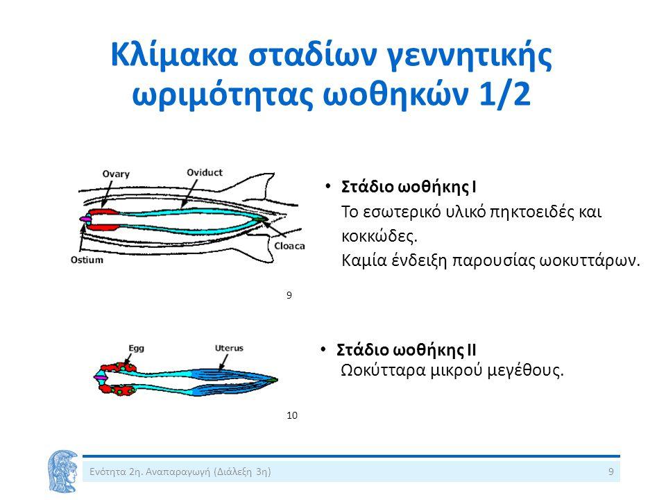 Κλίμακα σταδίων γεννητικής ωριμότητας ωοθηκών 1/2 Στάδιο ωοθήκης Ι Το εσωτερικό υλικό πηκτοειδές και κοκκώδες.