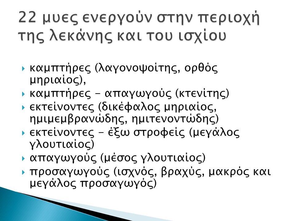  καμπτήρες (λαγονοψοίτης, ορθός μηριαίος),  καμπτήρες - απαγωγούς (κτενίτης)  εκτείνοντες (δικέφαλος μηριαίος, ημιμεμβρανώδης, ημιτενοντώδης)  εκτείνοντες - έξω στροφείς (μεγάλος γλουτιαίος)  απαγωγούς (μέσος γλουτιαίος)  προσαγωγούς (ισχνός, βραχύς, μακρός και μεγάλος προσαγωγός)