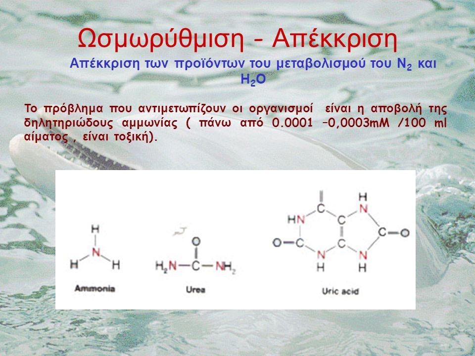 Απέκκριση των προϊόντων του μεταβολισμού του Ν 2 και Η 2 Ο Το πρόβλημα που αντιμετωπίζουν οι οργανισμοί είναι η αποβολή της δηλητηριώδους αμμωνίας ( πάνω από 0.0001 –0,0003mM /100 ml αίματος, είναι τοξική ).