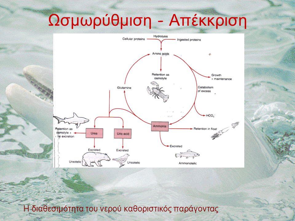 Ωσμωρύθμιση - Απέκκριση Η διαθεσιμότητα του νερού καθοριστικός παράγοντας